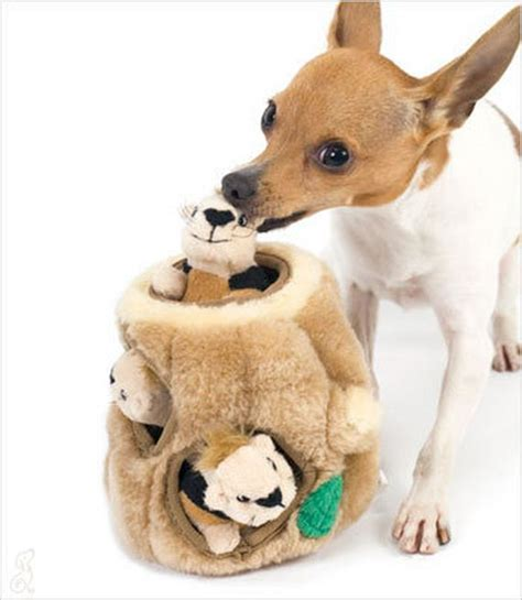 best toys for puppies the 10 best toys for small dogs ilovedogsandpuppies