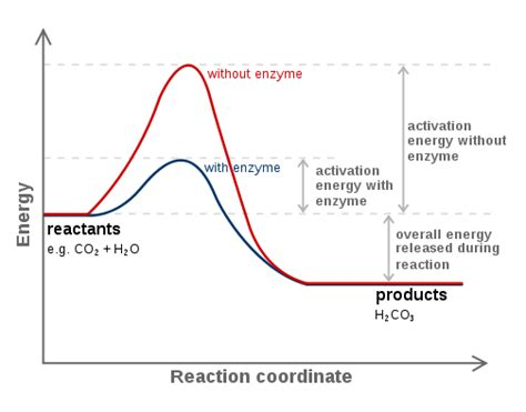 activation energy diagram structural biochemistry enzyme activation energy