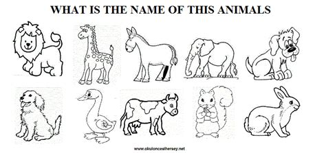Ready Senin Animal animal worksheet new 597 animal worksheet kindergarten