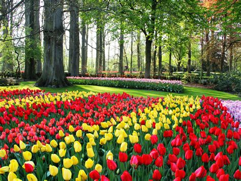 popular spring flowers the world s top 5 destinations for spring flowers