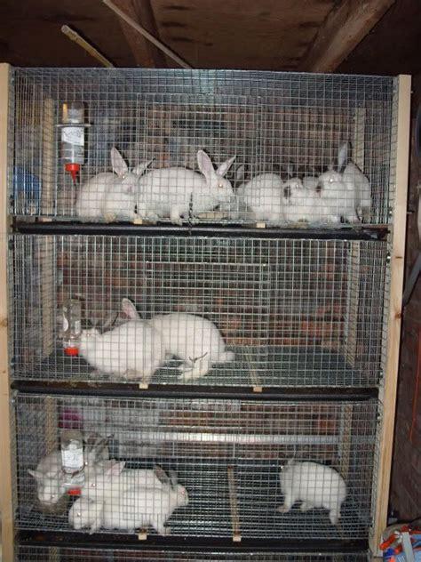 raising rabbit cages   exhibition