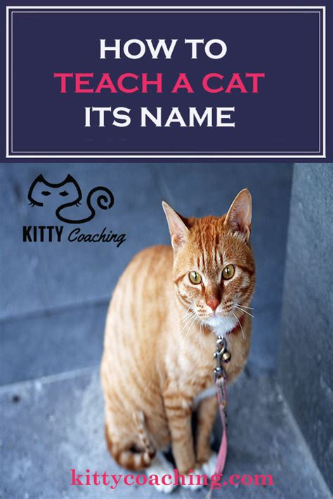 how to teach a its name how to teach a cat its name feb 2018