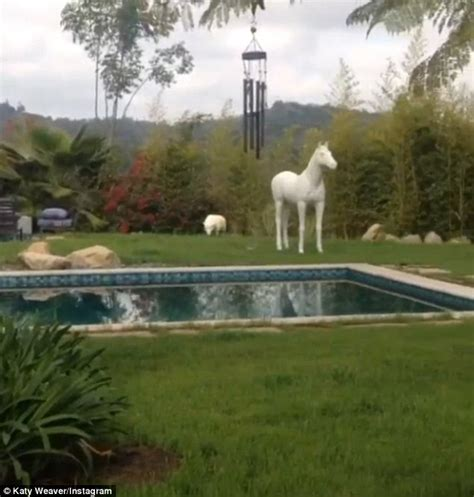 miley backyard miley cyrus weird backyard revealed in video daily mail