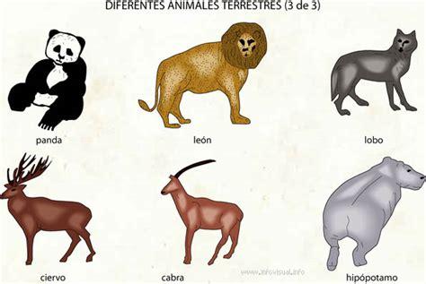 imagenes animales terrestres im 225 genes de animales terrestres im 225 genes