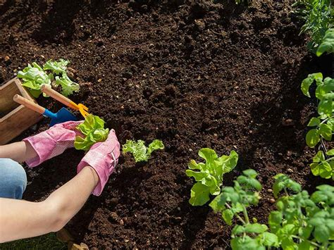 Gardening Techniques How To Improve Your Soil Saga