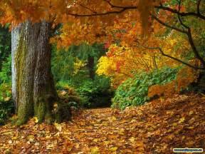 Tropical Plants Los Angeles - autumn leaves kim pereira