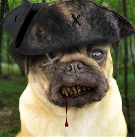evil pug shadowborder jakob deviantart