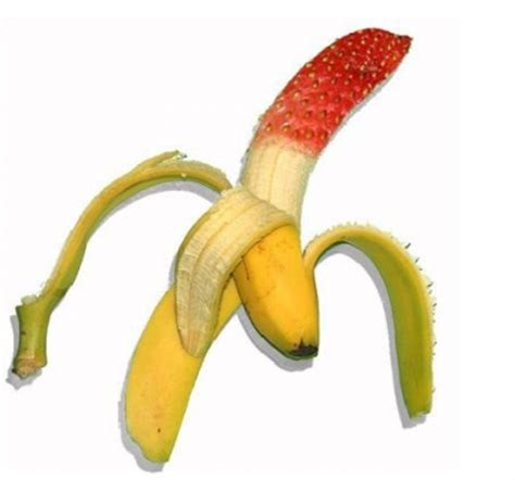 Genetic Modification Dictionary by Genetically Modified Bananas Encognitive