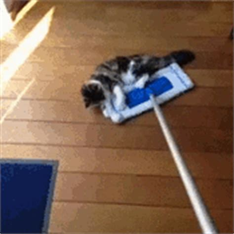 a broom and its accessories cat gif page