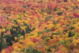 fall colors new 2017 new fall foliage forecast new today