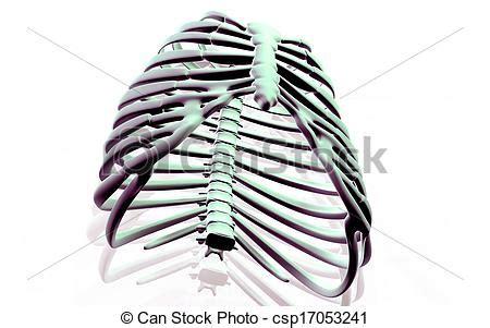 gabbia toracica anatomia gabbia toracica gabbia colore illustrazione fondo