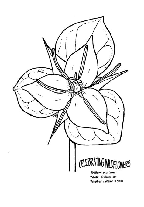 Free Coloring Pages Of Rainforest Plant Rainforest Plants Coloring Pages