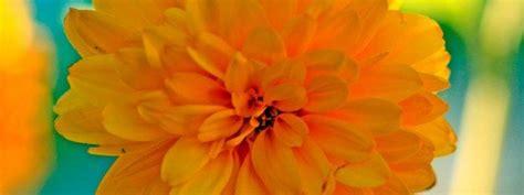 pianta dai fiori gialli pianta dai fiori gialli cose di casa