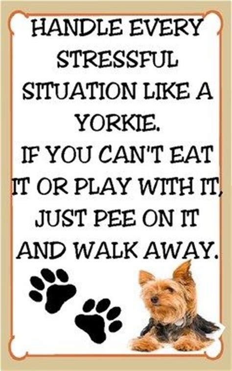 yorkie quotes quotes about yorkies quotesgram