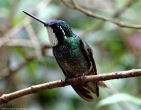 birds pictures laura s birding blog triple golden birthday