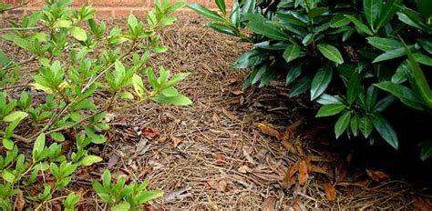 gnats in backyard how to control gnats outdoors today s homeowner