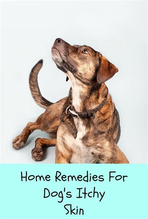 puppy relief essential oils for dogs archives paws right here