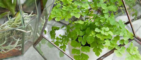 inhouse plants mahoney s garden center houseplants