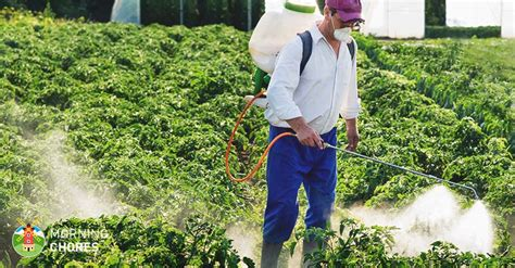Best Insecticide For Vegetable Garden by 5 Best Insecticides To Eliminate Bugs Ants And Pests In