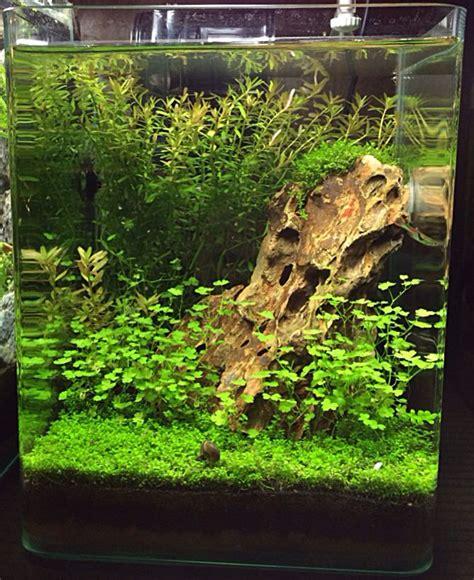 How To Aquascape A Freshwater Aquarium by What A Beautiful Nano Aquascape Needs An Assassin Snail