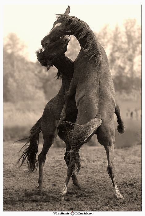 creature comforts horse 228 best images about horse play on pinterest arabian