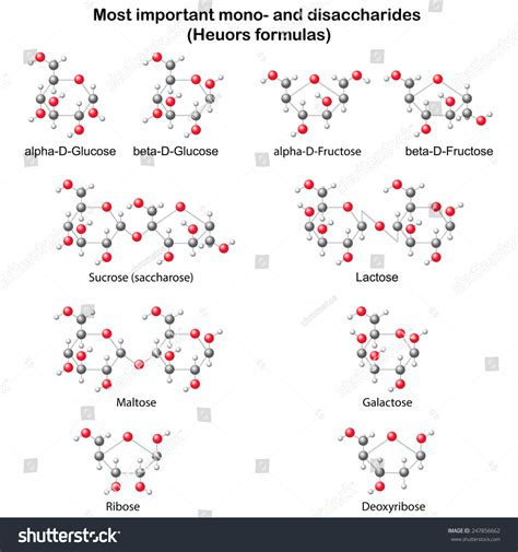 carbohydrates 3d model chemical models mono disaccharides glucose stock