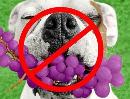 can dogs grapes best breed