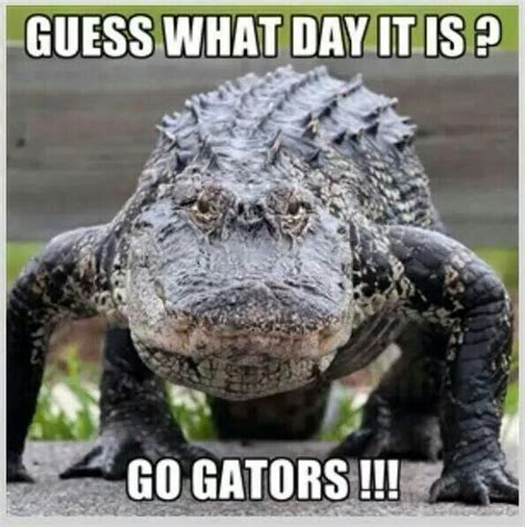 Funny Florida Gator Memes - best 25 florida gator memes ideas on pinterest florida