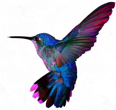 hummingbird colors hummingbird temporary