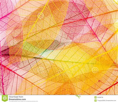 leaf transparent background stock photo image of