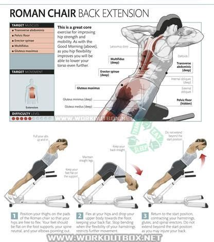 chair back extension muscles 50 best back images on workouts