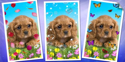 sweet puppies sweet puppies a 1mobile