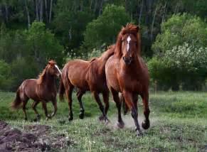 Professional Landscape Design Software by Running Horses Blueball Gravitas Design Blueball