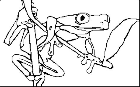 coloring pages of tree frogs coloring book red eyed tree frog