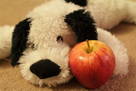 are apples bad for dogs are apples bad for dogs