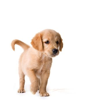 how to choose a puppy how to a puppy that is right for you