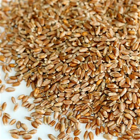 top 3 whole grains the 11 healthiest whole grains aaronshelley