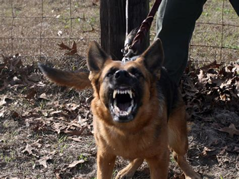 house guard dog canine security protection dogs for home defense