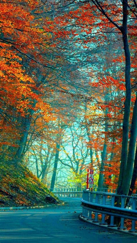 autumn wallpaper hd android long road in red trees best hd wallpapers for iphone and