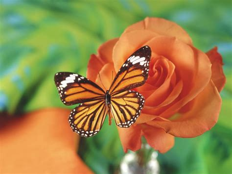 wallpaper flower and butterfly desktop wallpapers animals wallpapers flowers wallpapers