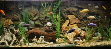 Cichlid Aquascape by Cichlids Tank Exles 120 Gal Rockslide Aquascape