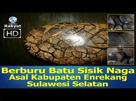 Batu Akik Sojol Dan Bulu Macan akik sulawesi naga sikoi doovi