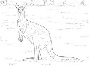 red kangaroo coloring page western grey kangaroo coloring page supercoloring com