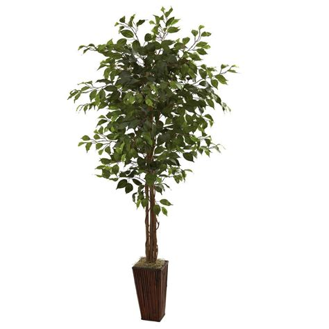 nearly 3 ft ficus silk tree 5298 the nearly 6 ft ficus tree with bamboo planter 5931