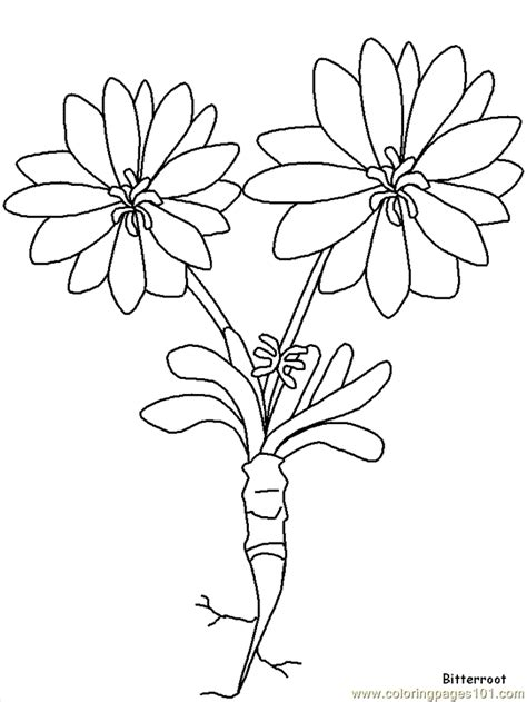 realistic flower coloring page realistic flowers coloring page free realistic flowers