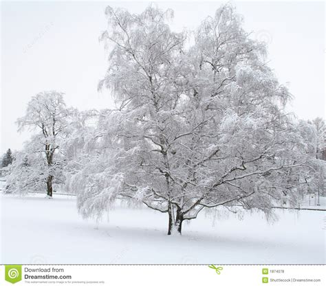 photos of snow snow scene stock photo image of chilly branches country