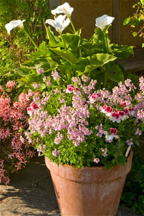 Containers: summer selection/RHS Gardening