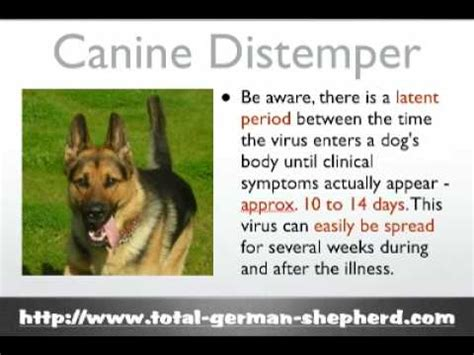 distemper in dogs distemper canine distemper virus what is distemper