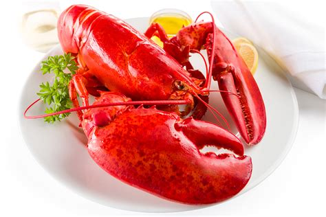 Lobster Pk lobster pakistan s only e sea food store