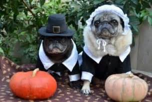 Thanksgiving Pug Pictures Pug Pilgrims Pugs In Costume Pinterest